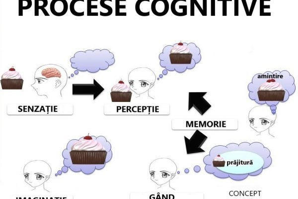diferența dintre percepție și senzație