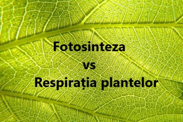 diferenta intre fotosinteza si respiratia la plante