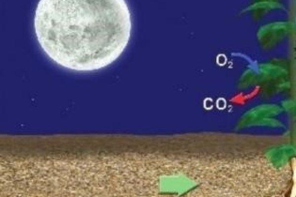 respiratia la plante noaptea